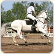Horse Arena Rubber Mulch